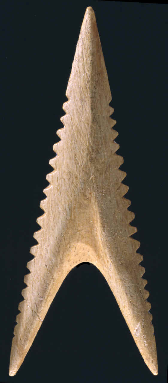 Bone shark tooth effigy arrow point from Cahokia.