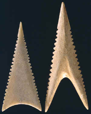 Two sharks tooth effigy bone Cahokia points.