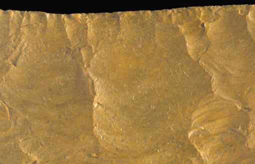 Magnified view of the edge of a Kansas square knife.