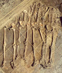 Four sacrificial male burials with hands and heads missing.